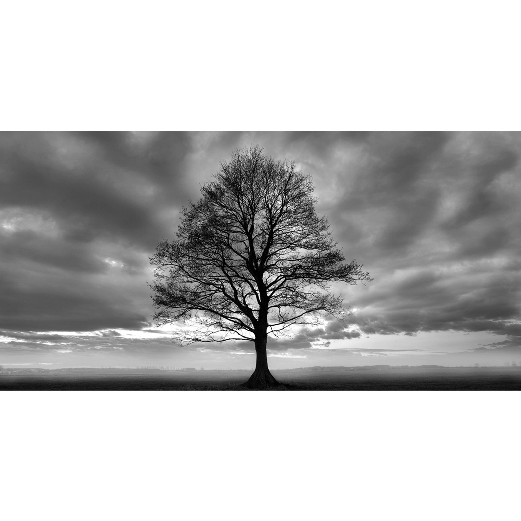 Lonely Tree Fotoprint 140 x 70 cm - Blank