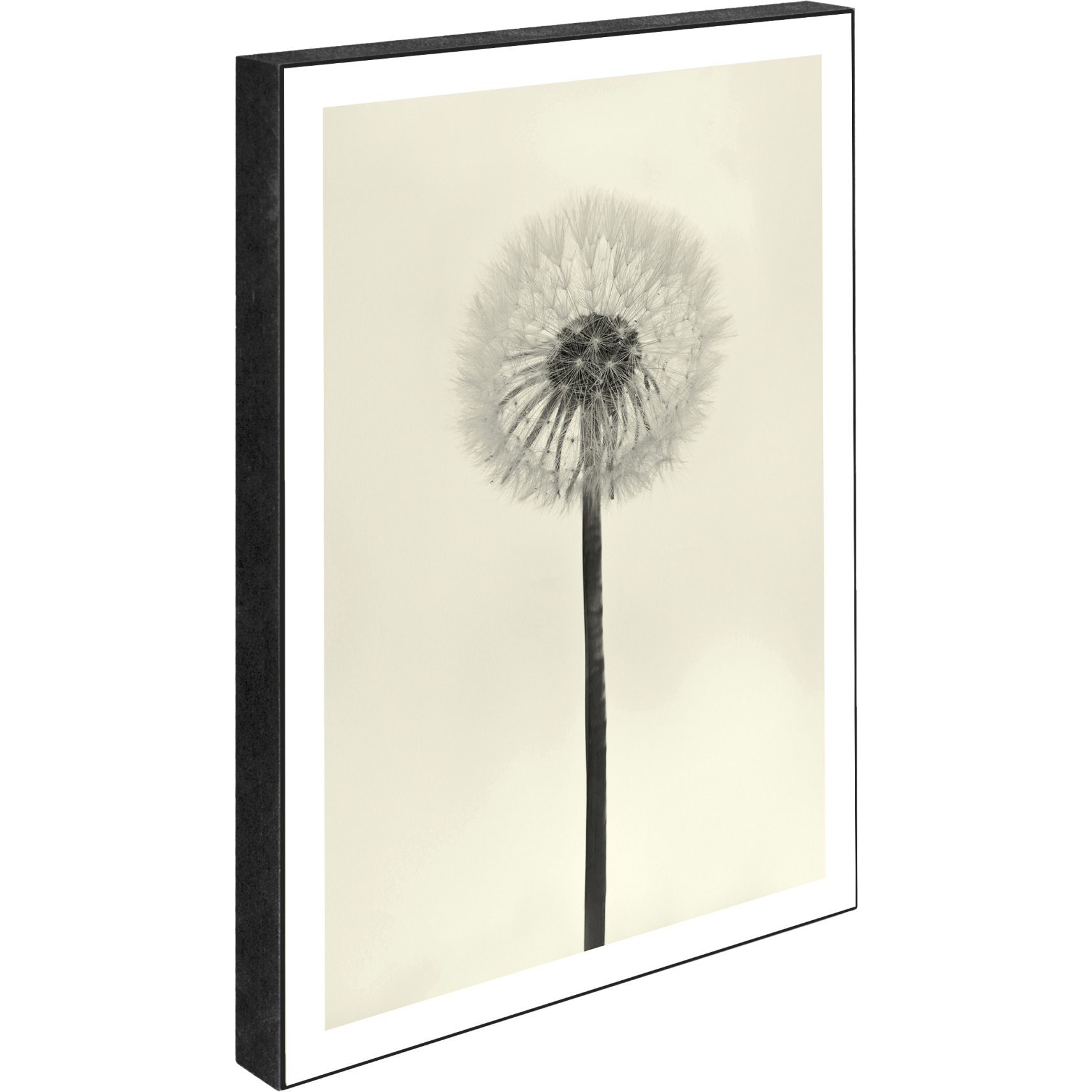 Blocks Skylt 15 x 21 x 2 cm - Dandelion - white