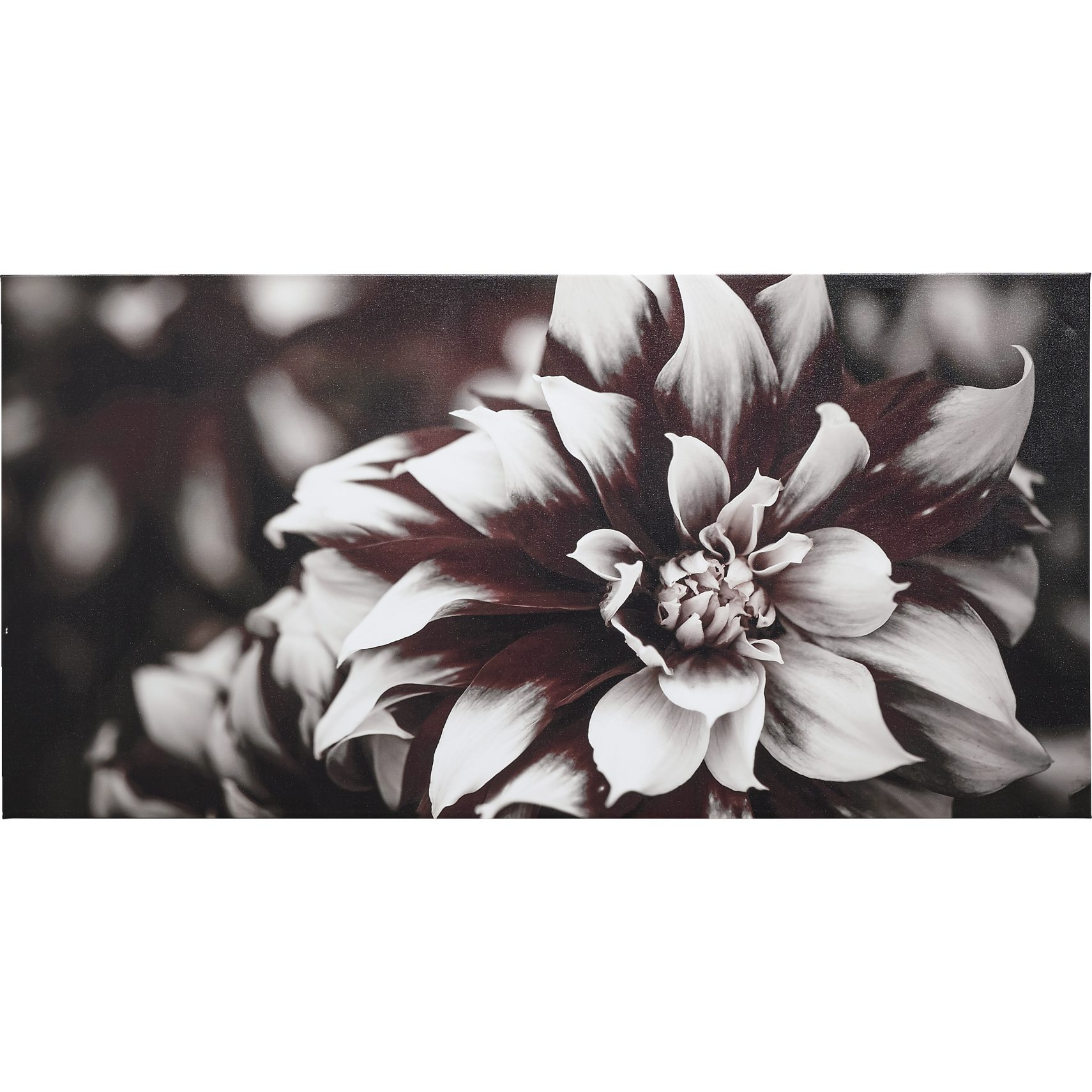 Dark Flower Fotoprint 140 x 70 x 3,5 cm -