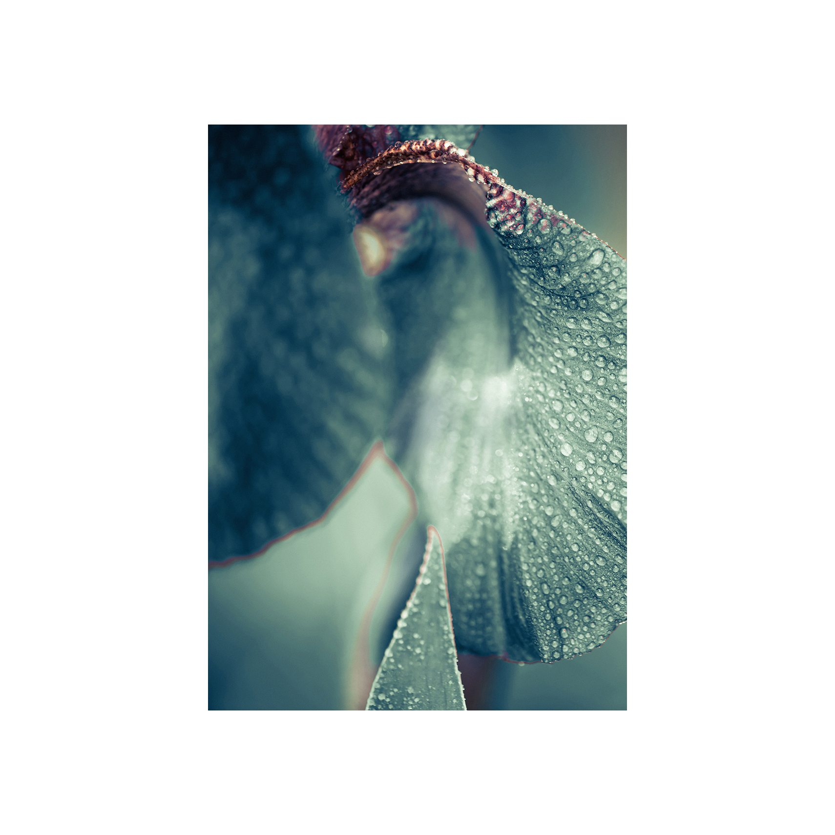 ARTPRINT 29 affisch utan ram 50 x 70 cm - Secret Garden Morning Dew